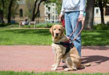 Zasady przewożenia psa przewodnika